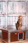 """Thermo Woody Ketzehütte mit Fensterwand """"CAT"""" innengrösse (LxBxH:54x38x28cm)"""